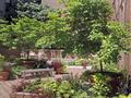 Soho Court: Garden (1)
